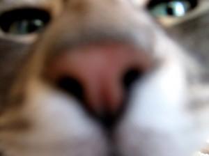 Zozo's Nose